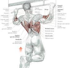 dominadas musculos